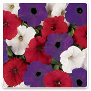 Oconomowoc Landscape Supply & Garden Center Petunias Annual Flowers