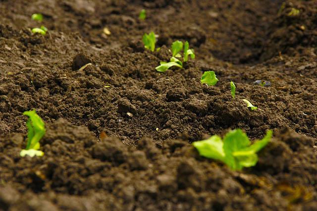 oconomowoc landscape supply garden center topsoil - Garden Soil