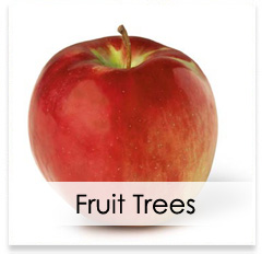 Oconomowoc Landscape Supply & Garden Center Fruit Trees