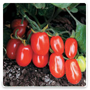 Oconomowoc Landscape Supply & Garden Center Backyard Classics Vegetables
