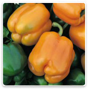 Oconomowoc Landscape Supply & Garden Center Organic Vegetables